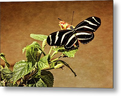 Metal Print featuring the photograph Zebra Longwing by Dawn Currie