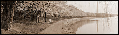 Cherry Blossoms View At Tidal Basin Poster