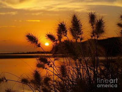 Poster featuring the photograph Golden Glow by Trena Mara