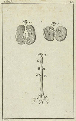 Three Representations Of The Germination Of Seed Poster