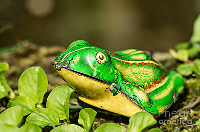 Vintage Tin Toy Frog Sitting In The Grass Poster