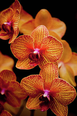Deep Cut Orchid Society 15th Annual Orchid Show Poster