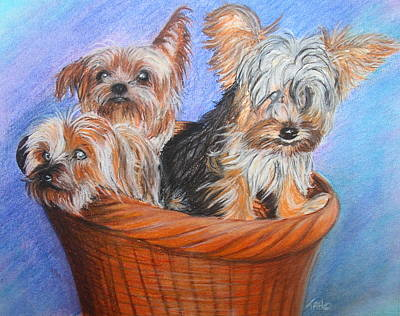 3 Yorkies In A Basket Poster by Tracey Hunnewell