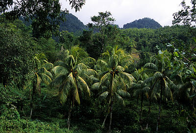 A Forest Scene In Jamaica Poster by Stacy Gold