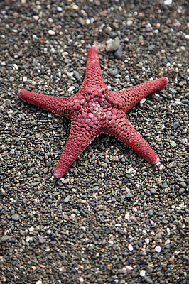 A Starfish On A Beach Poster by Tobias Titz