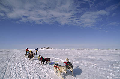 Dog Sled Crosses Frozen Lake Poster by Gordon Wiltsie