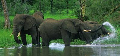 Elephant Shower Poster