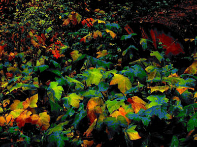 Fall Thimbleberry Poster by Anne Havard