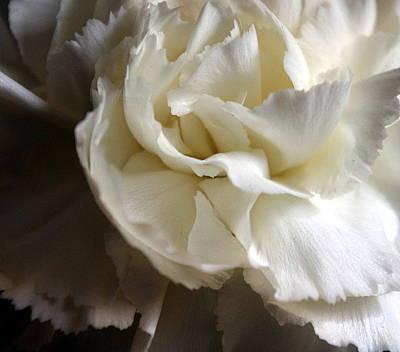 Poster featuring the photograph Flower Beauty by Deniece Platt