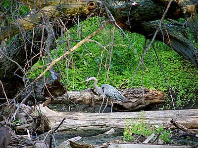 Heron Habitat Poster by Sue Stefanowicz