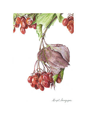 Poster featuring the painting Highbush Cranberry  by Margit Sampogna