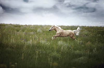 Horsepower Poster by Arman Zhenikeyev - professional photographer from Kazakhstan