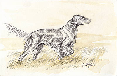 Irish Setter Sketch Poster by Callie Smith