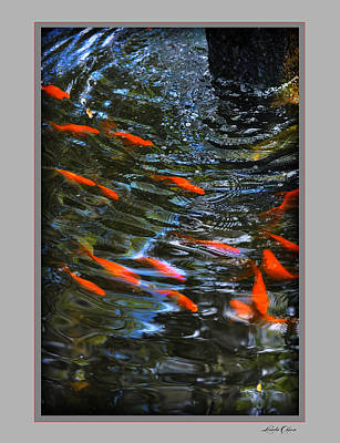 Poster featuring the photograph Koi Swirl by Linda Olsen