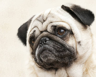 L-o-l-a Lola The Pug Poster