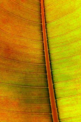 Leaf Pattern Poster by Carlos Caetano
