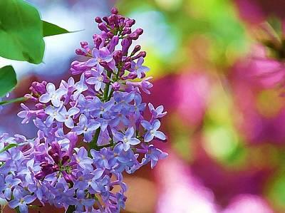 Lilacs 2012 Poster