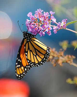 Monarch 2011 E Poster