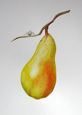 Poster featuring the painting Pear With Spider by Margit Sampogna