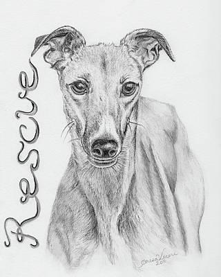 Petunia Poster by Teresa Vecere