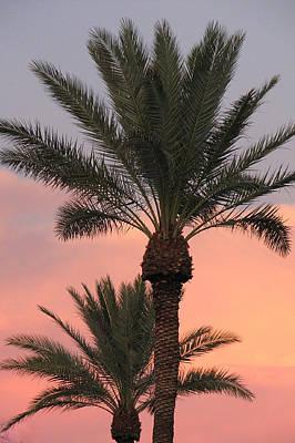 Precious Palm Poster