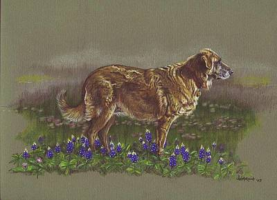 Sasha In The Bluebonnets - Leonberger Poster