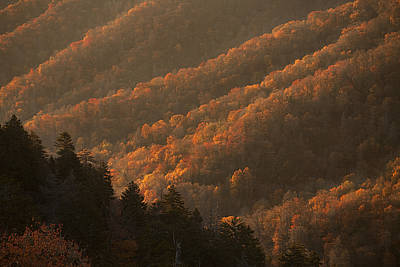 Smokies Hillside At Autumn Poster by Andrew Soundarajan