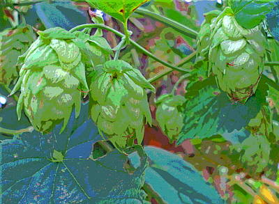 Sun Dappled Hops Vine Seed Cones Poster by Padre Art