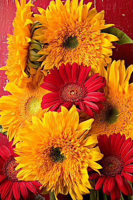 Sunflowers And Red Mums Poster
