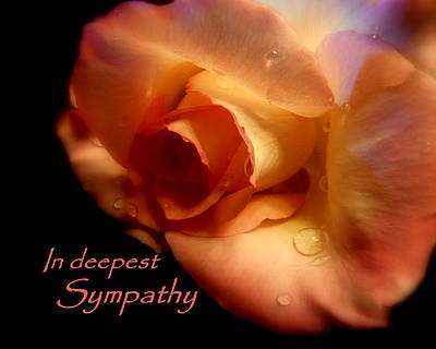 Sympathy Rose Poster by Cindy Wright