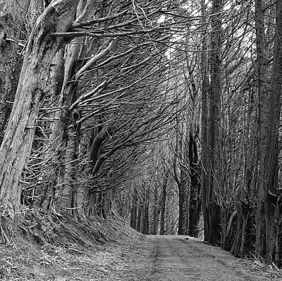 Trees Along Sandymount Track, New Zealand Poster by Atan Chua
