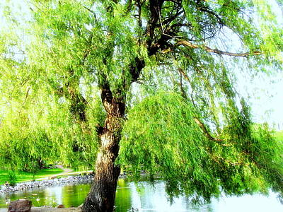 Willow Over Pond Poster by Clarice  Lakota