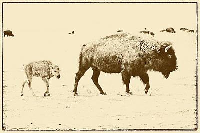 Bison Mother And Calf Art Print