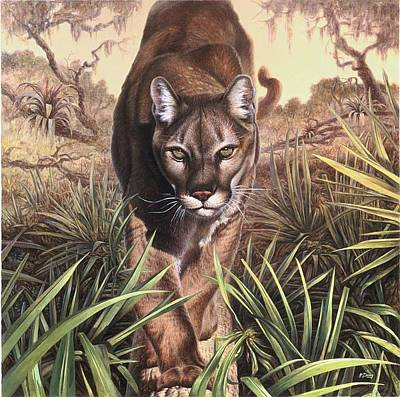 Portraits Royalty-Free and Rights-Managed Images - Florida Panther by Hans Droog
