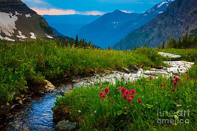 Lilies Royalty-Free and Rights-Managed Images - Hidden Lake Pass by Inge Johnsson