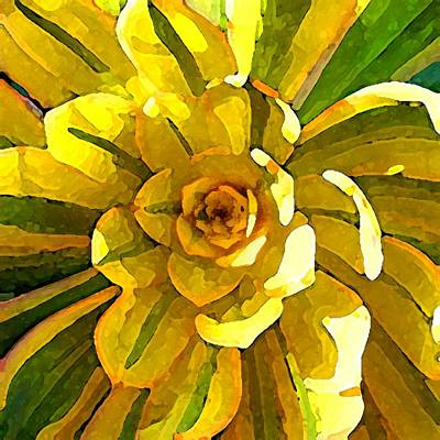 Florals Royalty-Free and Rights-Managed Images - Sunburst Succulent Square by Amy Vangsgard
