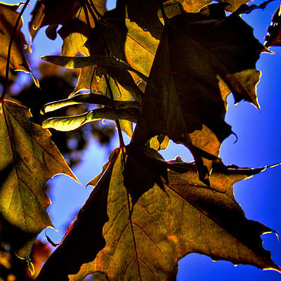 Pods Photograph - Backlit Leaves  by David Patterson