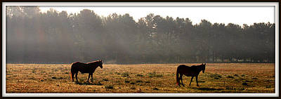 Photograph - Equine Morning 013 by Mark J Seefeldt