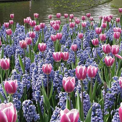 Dutch Photograph - #flowers #tulips #keukenhof #dutch by Robin Boer