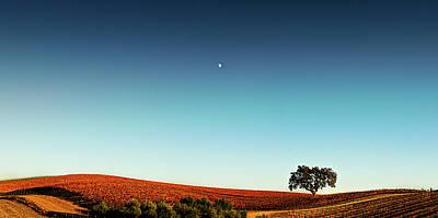 Vineyard Sky Panorama Art Print by Larry Gerbrandt