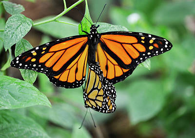 Fluttering Photograph - Hanging On by Melanie Moraga