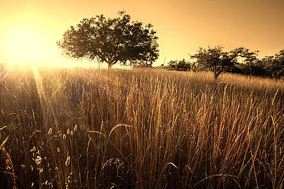 Bello Photograph - Sun-kissed California Meadow by Matt Tilghman