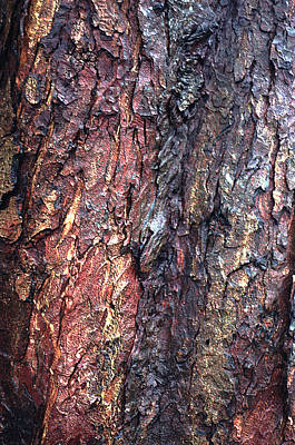 Extreme Close Up Photograph - Tree Bark by John Foxx