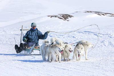 Huskies In Ilulissat, Greenland Art Print