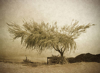 Photograph - A Sky The Colour Of Memory by Tara Turner