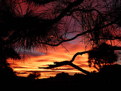 Cindy Wright Photograph - A Wishbone Sunset by Cindy Wright