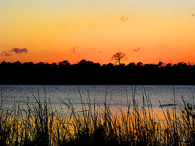 St. Lucie County Photograph - Above The Rest by Grace Dillon