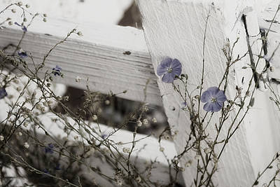 Blue Flowers Photograph - Against The Fence by Rebecca Cozart