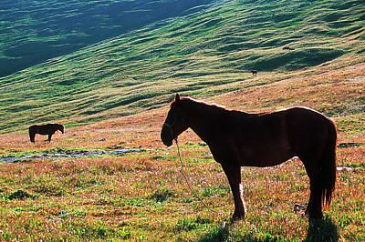 Horse Photograph - Altay by Konstantin Dikovsky