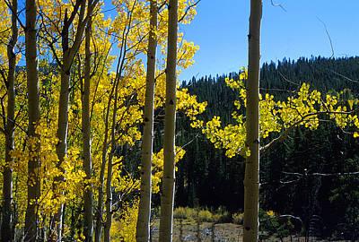 Aspen Photograph - Aspen Vista by Jerry McElroy